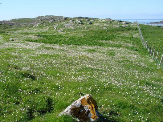 Hillside covered in wild flowers