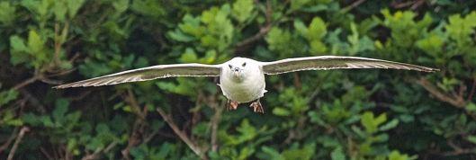 flyingfulmar