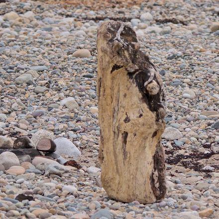 woodbeach