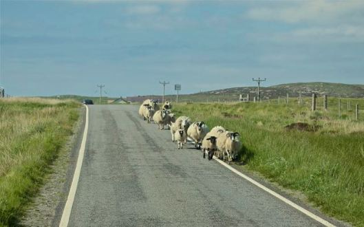 sheepqueue